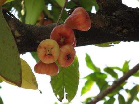 und fremdartige Knospen oder Früchte?