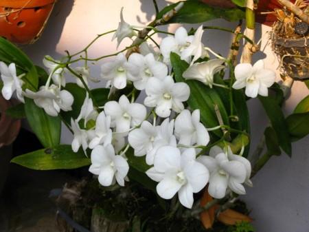 weiße...