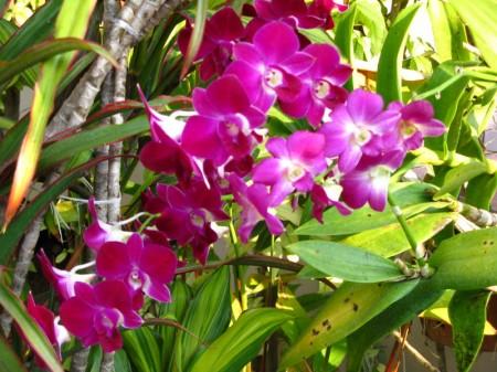 und bunte Blüten, wohin man schaut