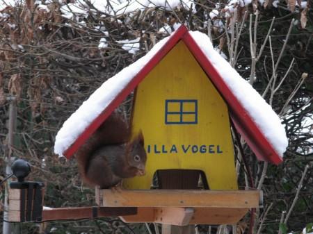 Luigi in der Villa Vogel